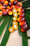 Palm Oil seeds Royalty Free Stock Photography