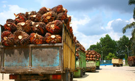 Palm Oil Supply Stock Image