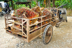 Palm oil trolley Royalty Free Stock Photo