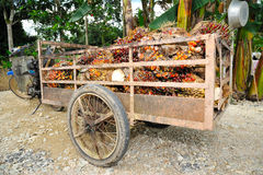 Palm oil trolley Stock Images