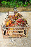 Palm oil trolley Royalty Free Stock Images