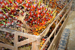 Palm oil trolley Royalty Free Stock Photography