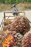 Palm oil trolley Stock Photography
