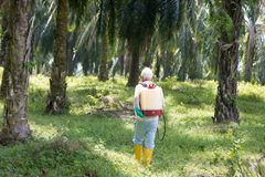 Palm oil and worker. royalty free stock image