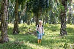 Spraying herbicides at plantation. Palm oil worker spraying herbicides to poisoning weeds at plantation stock photos