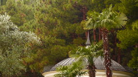 Palm and olive trees on the background of pine forest. You can also see the roof of the gazebo stock footage