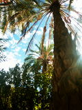 palm omhoog Stock Foto