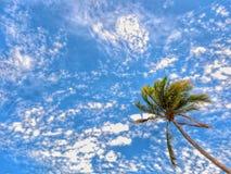 Palm onder blauwe hemel Stock Afbeeldingen