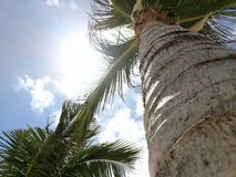 Palm onder carribean zon Stock Afbeelding
