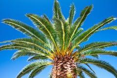 Palm op blauwe hemel Royalty-vrije Stock Foto