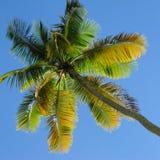 Palm op blauwe hemelachtergrond Royalty-vrije Stock Fotografie