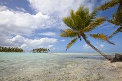 Palm op blauwe lagune van woestijneiland Royalty-vrije Stock Foto