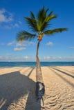 Palm op Caraïbisch strand met wit zand Stock Foto's