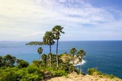 Palm op de kaap bij strand Royalty-vrije Stock Foto's
