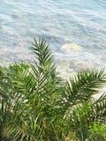 Palm op de kust Stock Afbeelding