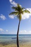 Palm op de kust en de blauwe hemel met wolken Stock Fotografie