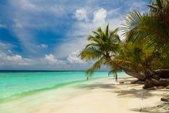 Palm op de kust van de Maldiven Stock Afbeeldingen
