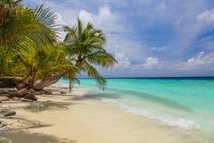 Palm op de kust van de Maldiven Royalty-vrije Stock Foto's