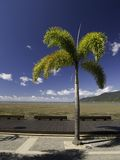 Palm op de promenade Stock Foto