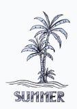 palm op de zomerachtergrond Royalty-vrije Stock Foto's