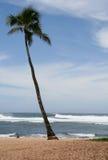 Palm op een strand Royalty-vrije Stock Foto