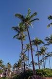 Palm op een strand stock afbeeldingen