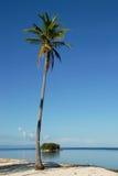 Palm op een tropisch strand Stock Afbeeldingen