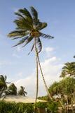 Palm op een wind Royalty-vrije Stock Foto's