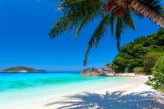 Palm op een wit strand Stock Afbeeldingen