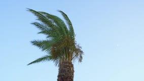 Palm op een zonnige dag stock footage