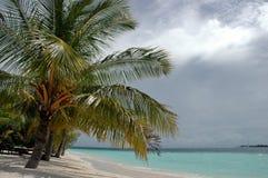 Palm op eiland Stock Fotografie