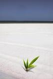 Palm op het strand Stock Foto