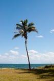 Palm op het strand Royalty-vrije Stock Fotografie