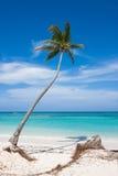 Palm op het strand Stock Fotografie