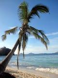Palm op het strand stock afbeelding