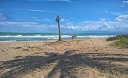 Palm op het strand Cabarete Stock Afbeeldingen