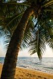 Palm op het strand in Thailand royalty-vrije stock fotografie