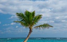 Palm op het Strand van Punta Cana - Landschap Royalty-vrije Stock Foto