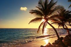 Palm op het tropische strand Royalty-vrije Stock Foto