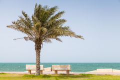 Palm op kust van Perzisch Golf, Saudi-Arabië Royalty-vrije Stock Foto