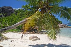 Palm op leeg strand Stock Afbeelding