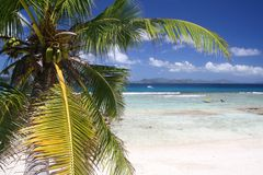 Palm op leeg strand Stock Fotografie