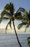 Palm op Maui Royalty-vrije Stock Foto's