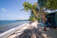 Palm op strand Royalty-vrije Stock Afbeelding