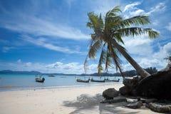 Palm op strand Bangtao. Thailand. stock fotografie