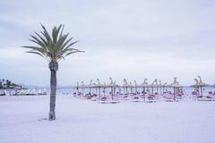 Palm op strand met pedalos en mensen Royalty-vrije Stock Foto's