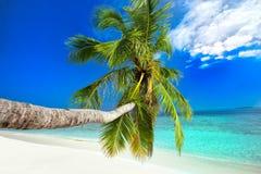 Palm op tropisch eiland met turkoois duidelijk water Royalty-vrije Stock Fotografie