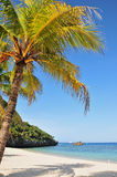 Palm op tropisch strand Stock Foto