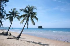 Palm op Tropisch Strand Stock Foto's