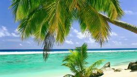 Palm op tropisch strand van Rarotonga, Cook Islands stock footage